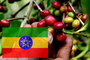 Кофе Эфиопия Иергачиф 250 г зерно