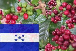 Кофе Гондурас 250 г зерно