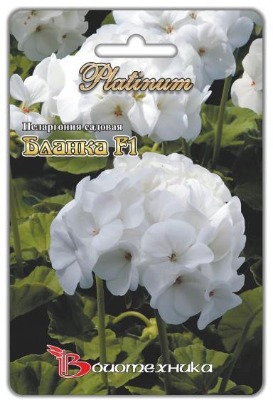 Пеларгония садовая Бланка F1