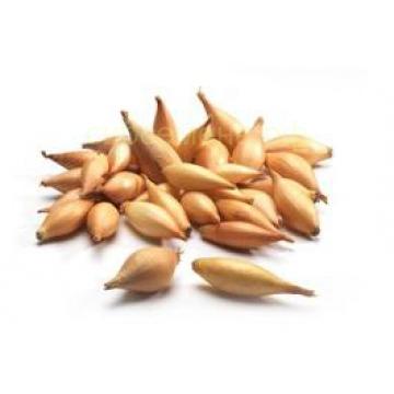 Лук Центурион 1мешок (20 кг +/- 5% )