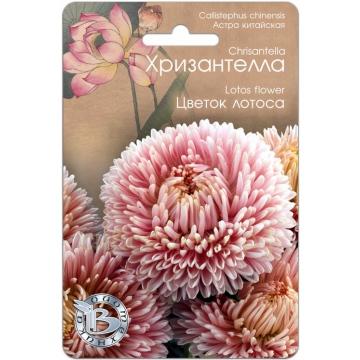 Астра Хризантелла Цветок Лотоса (Петербург)