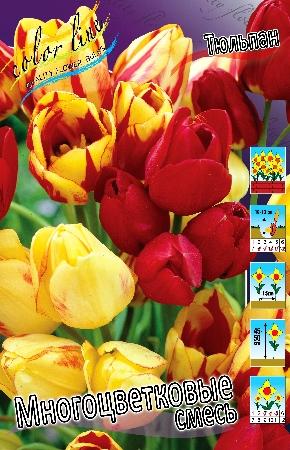 Тюльпан Многоцветные смесь