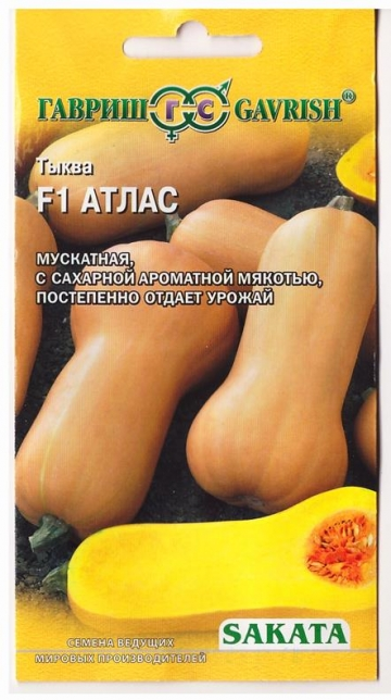 Тыква Атлас F1 (Код: 77699)