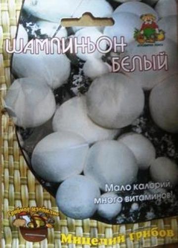 Грибы Шампиньон Белый (Код: 83121)