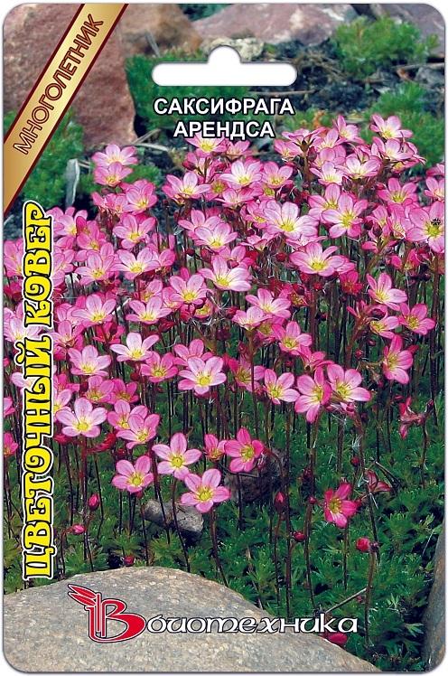 Саксифрага Арендса Цветочный Ковер