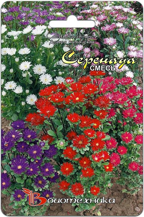 Астра китайская Серенада смесь расцветок