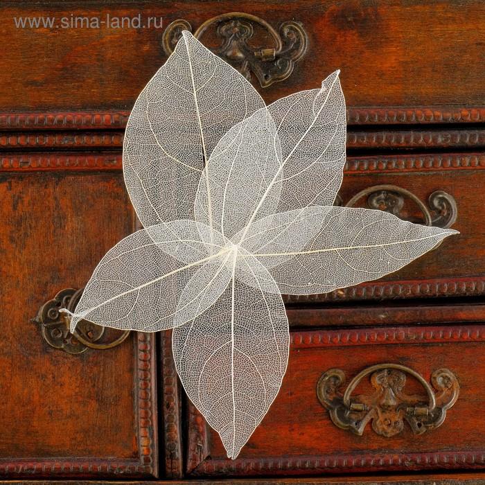 Сухие листья, (набор 5 шт), размер 1 шт 8*5, цвет белый