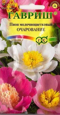 Пион Молочноцветковый Очарование