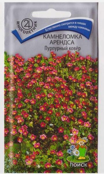 Камнеломка Арендса Пурпурный ковер