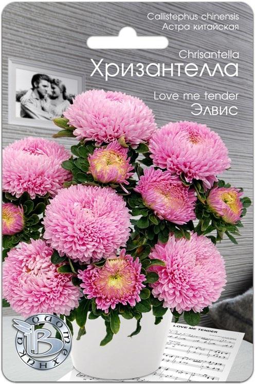 Астра китайская Хризантелла Элвис