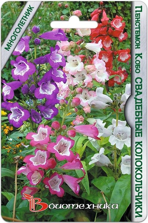 Пенстемон Кобо Свадебные Колокольчики (Смесь расцветок)