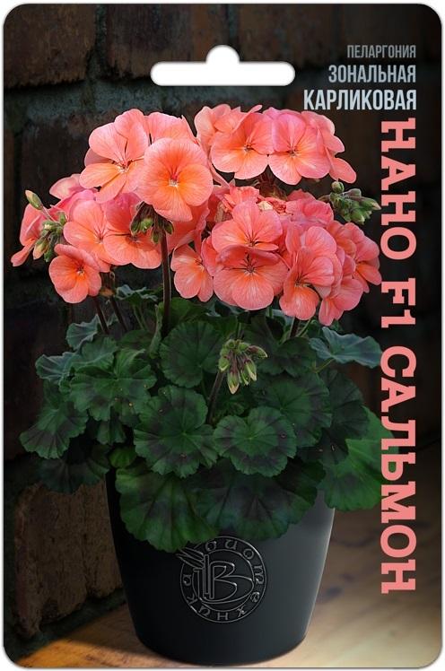 Пеларгония зональная карликовая Нано F1 Сальмон