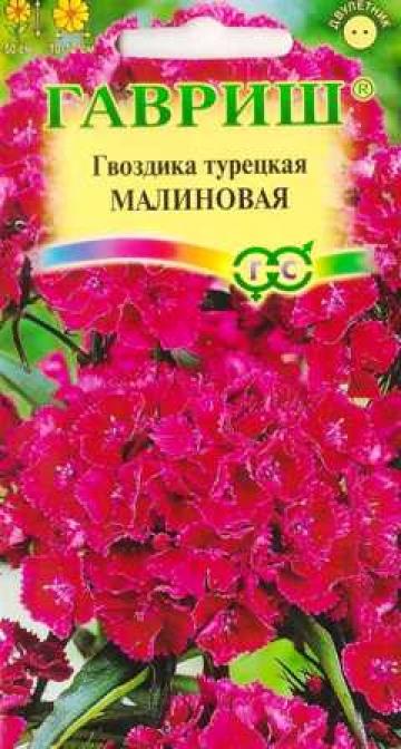 Гвоздика Турецкая Малиновая (Код: 87337)