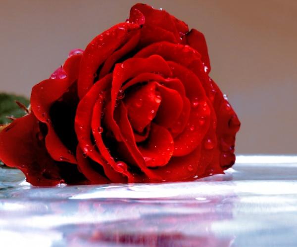 Цветочная вода Розы (органик), 50мл